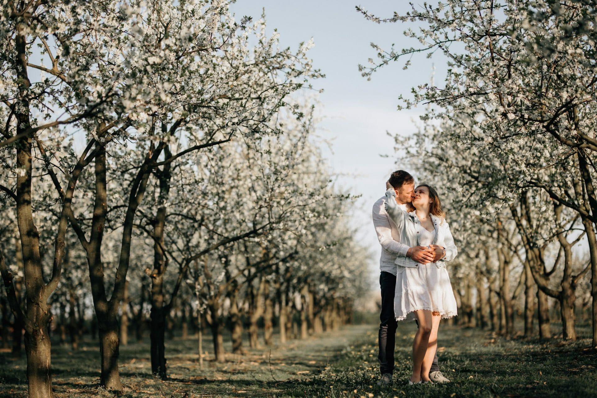 sesja zdjęciowa w sadzie owocowym